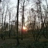 Холодные закаты... :: Алёна Савина