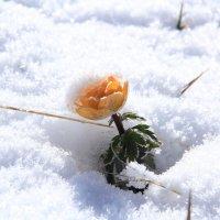 думал весна... :: Nikolay