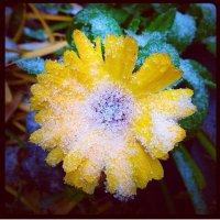 Первый снег :: Мария Корнилова