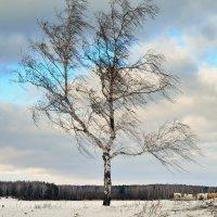 Одна на ветру. :: Сергей Адигамов