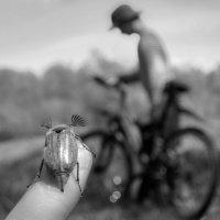 Вперед! Навстречу ветру! :: Анна Санжарова