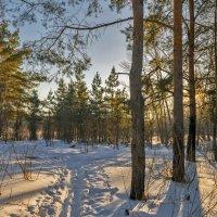 Вечер на лесной поляне :: Любовь Потеряхина