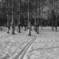 Последняя лыжня. :: Leonid Volodko