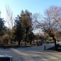 Февраль в парке... :: Тамара (st.tamara)
