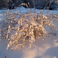 Зимний куст :: Елена Семигина
