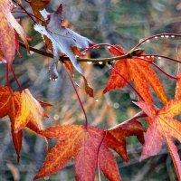 Осень :: СветЛана D