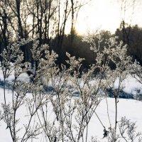 Солнечный свет. :: Ozokan Головкин