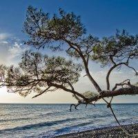 Одно деревце :: Александр Ткачёв