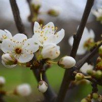Повеяло весной... :: Zinaida Belaniuk