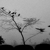 Портрет девяти ворон :: Val Савин