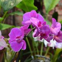 Орхидея. :: Oleg4618 Шутченко