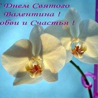 С Днем Святого Валентина ! :: Александр Резуненко