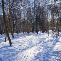 В зимнем парке. :: Юрий Шувалов