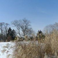 Прогуливаясь в парке (High Park, Toronto) :: Юрий Поляков