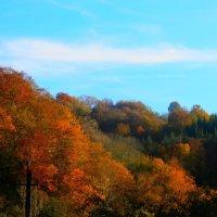 Сочинская осень :: Difoxy *
