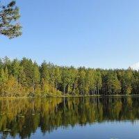 Петяярви, озеро Лебяжье :: Елена Павлова (Смолова)