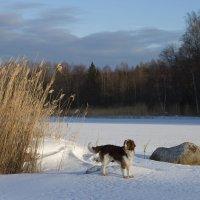 солнечный февраль :: liudmila drake