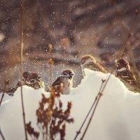 зимние забавы :: Ирина Кулагина
