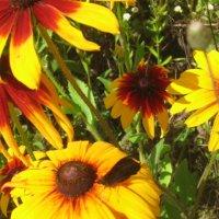 Цветы :: Виктор Шимолин