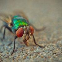 Fly :: Александр Хохлов