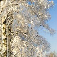 Зимушка-краса!!! :: Александра Мустафина