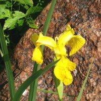 Цветок и камень :: Grey Bishop