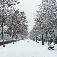 В нашем городе снег... :: Наталья