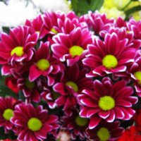 Макро цветочки. :: Антонина Гугаева