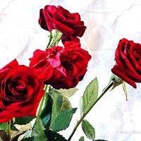 Вот роза раскрыла уста :: Сергей Михайлов