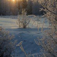 Зимний этюд. :: mike95
