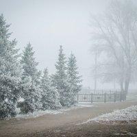 Туманное утро :: Елена Остапова