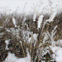Сегодня в белом инее трава . :: Валентина ツ ღ✿ღ