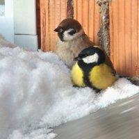 в засаде) :: linnud