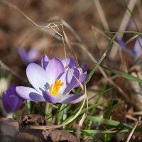 кусочек весны :: Katerina Tighineanu