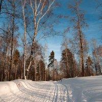 Лыжня :: Евгения Каравашкина