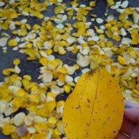 Золотая Осень :: София Запа