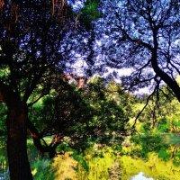 Рисунки на весеннем пруду :: Svetlana27