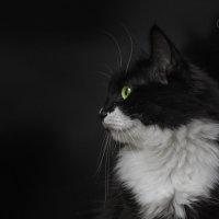 Магия чёрного :: VitokFly
