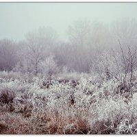 Туман и иней :: Надежда