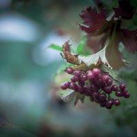 Природа :: Анна Катаева