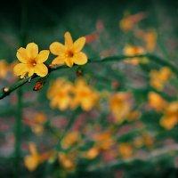 Первые цветы. :: ОЛЕГ ПАНКОВ