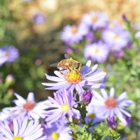 пчелка :: Марина