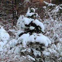 Ни один мороз не страшен :: Nikolay Monahov
