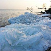 Берег Куршского залива. :: Валерия Комова