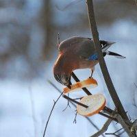 нашла! :: linnud