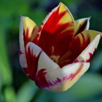 Разноцветная весна :: Ольга A.