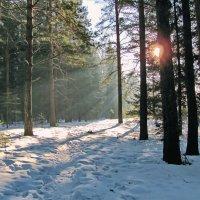 Туманный лес :: Юрий Кузмицкас