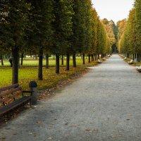 Осенняя аллея :: Константин Фролов