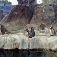 Пингвинчики. :: Елена Дёмина