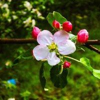 Цветы :: Николай Лазаревич